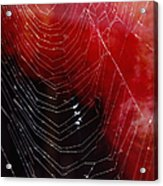 The Webs We Weave Acrylic Print