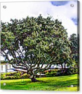 The Wedding Tree Acrylic Print