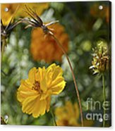 The Weed Series Number 123 Acrylic Print
