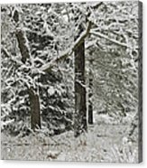 The Weight Of Winter Acrylic Print