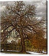 The Welcome Tree Acrylic Print