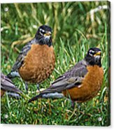 The Welcoming Committee E186 Acrylic Print