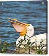 The White Pelican Acrylic Print