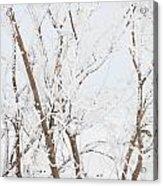 The Whites Of Winter Acrylic Print