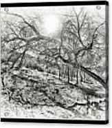 The Wicked Trees Acrylic Print