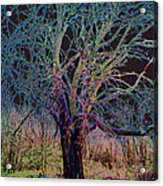 10994 The Widow Tree Acrylic Print