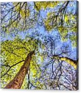 The Wild Forest Acrylic Print