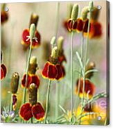 The Wildest Of Flowers Acrylic Print