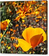 The Wildflowers Are Here And Spring Has Arrived Acrylic Print