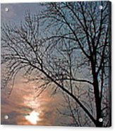 The Winter Skies Acrylic Print by Rhonda Humphreys