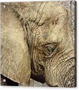 The Wise Old Elephant Acrylic Print