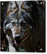 The Wolf Digital Art Acrylic Print