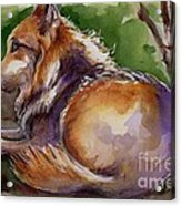 The Wolf Star Acrylic Print