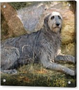 The Wolfhound  Acrylic Print by Fran J Scott
