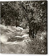 The Wooded Path Acrylic Print