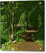The Wooded Path... Acrylic Print