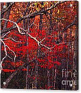 The Woods Aflame In Red Acrylic Print