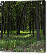 The Woods And The Road From The Series The Imprint Of Man In Nature Acrylic Print