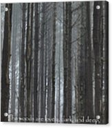 The Woods Acrylic Print by Bill Wakeley