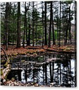 The Woods Reflected Acrylic Print
