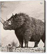 The Woolly Rhinoceros Is An Extinct Acrylic Print by Philip Brownlow