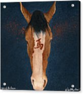 The Year Of The Horse... Acrylic Print