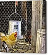 The Yellow Chicken Acrylic Print