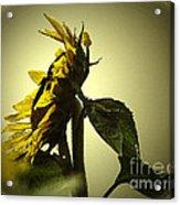 The Yellow Glow Acrylic Print