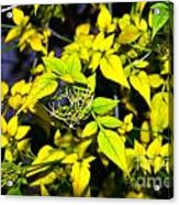 The Yellow Plant Acrylic Print