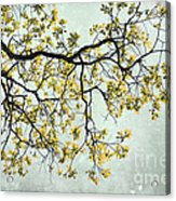 The Yellow Tree Acrylic Print by Sharon Coty