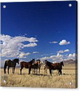 Their Desert Home Acrylic Print