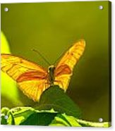 Then A Butterfly Acrylic Print