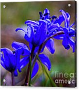 Then It Was Spring 3 Acrylic Print