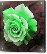 There Were Roses Triptych Acrylic Print