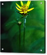 There's A Secret World Acrylic Print