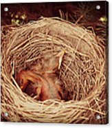 They've Hatched Acrylic Print