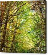 Thick Forest Hdr Acrylic Print