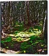 Thicket-like Woods And Spongy Moss Near Lobster Cove In Gros Mor Acrylic Print