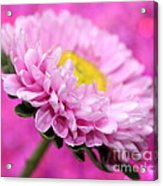 Think In Pink Acrylic Print