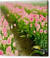 Think Pink Acrylic Print by Nick  Boren