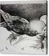 Thirsty Crow Acrylic Print