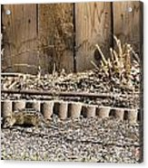 Thirteen-lined Ground Squirrel Acrylic Print