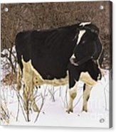 This Is My Good Side Acrylic Print