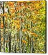 This Is What Autumn Brings Acrylic Print