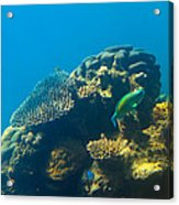 This Is Why They Call It The Great Barrier Reef Acrylic Print