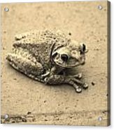 This Old Frog Acrylic Print