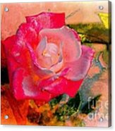 This Rose Reminds Me Of You Acrylic Print