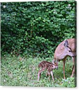 This Standing Up Is Hard Mom Acrylic Print