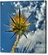 Thistle And Sky Acrylic Print
