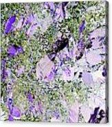Thistles Acrylic Print